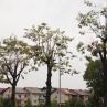 drevesa_grosuplje_1