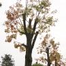 drevesa_grosuplje_2