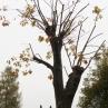 drevesa_grosuplje_4