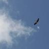 aviacija-na-nasem-nebu