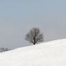 zimski