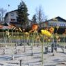 cvetoce_krozisce_grosuplje_8_marec