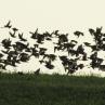ptice_v_letu_w.jpg